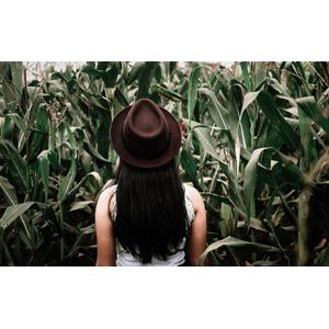フリー写真, 人物, 女性, 外国人女性, 人と風景, 畑, 作物, 穀物, とうもろこし(トウモロコシ), 後ろ姿, 帽子, 中折れハット