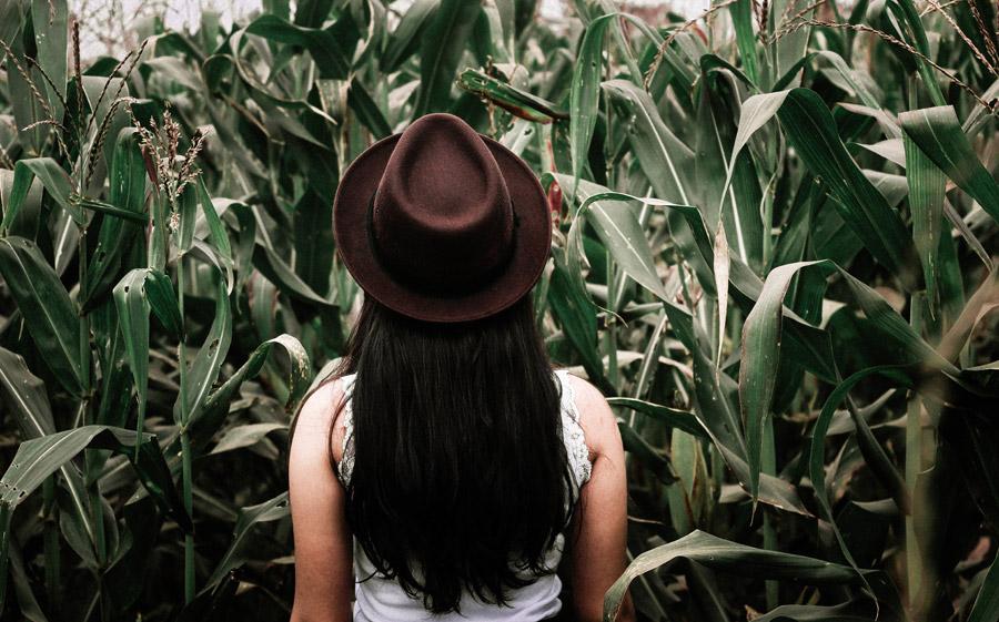 フリー写真 帽子を被ってとうもろこし畑にいる女性の後ろ姿