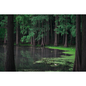 フリー写真, 風景, 自然, 湖, 森林, 樹木, 中国の風景