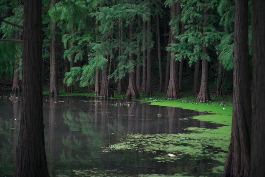 フリー写真 森の中にある湖の風景