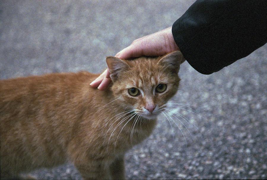 フリー写真 撫でられている猫