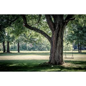 フリー写真, 風景, 公園, 芝生, 遊具, ブランコ, 樹木