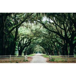 フリー写真, 風景, 並木道, 樹木, アメリカの風景, ジョージア州, 小道