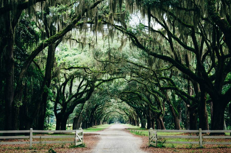 フリー写真 サバンナのオーク並木の風景