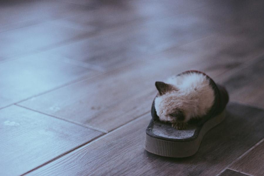 フリー写真 スリッパの上で眠る子猫