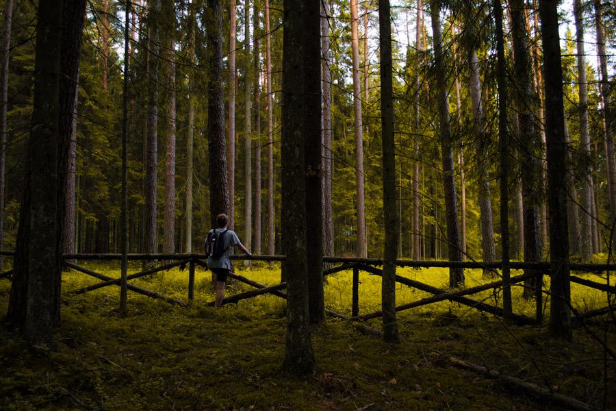 フリー写真 林の木々と柵に手を掛ける男性の後ろ姿