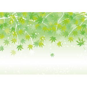 フリーイラスト, ベクター画像, AI, 背景, 植物, 葉っぱ, もみじ(カエデ), 青もみじ