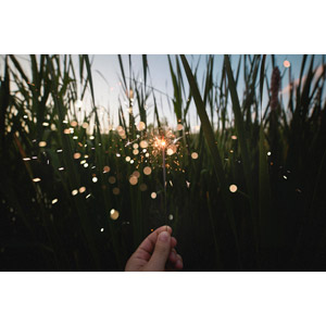 フリー写真, 花火, 線香花火, 植物, 雑草, 草むら, 手