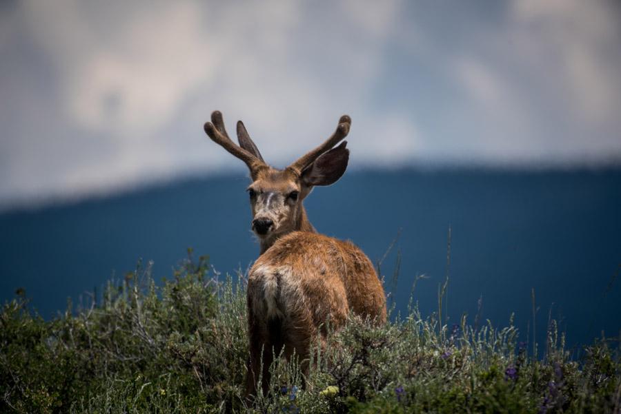 フリー写真 振り返る鹿