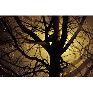 フリー写真, 風景, 樹木, 光(ライト), 枝