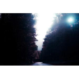 フリー写真, 風景, 森林, 道路, 並木道, 太陽光(日光), ニュージーランドの風景