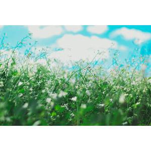 フリー写真, 風景, 自然, 植物, 雑草, 草むら, 青空, 雲
