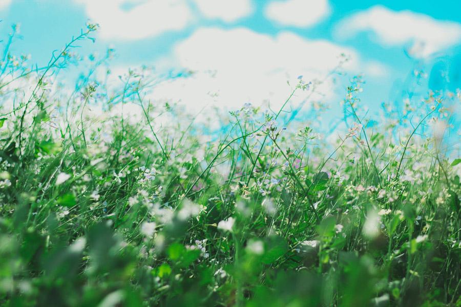 フリー写真 青空と草花