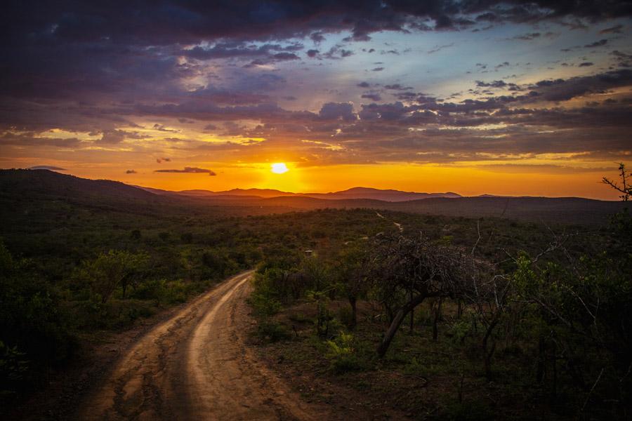 フリー写真 夕暮れのサバンナの風景