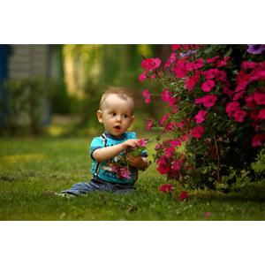フリー写真, 人物, 子供, 赤ちゃん, 座る(地面), 人と花, 芝生