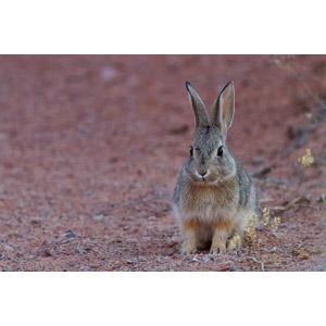 フリー写真, 動物, 哺乳類, 兎(ウサギ)