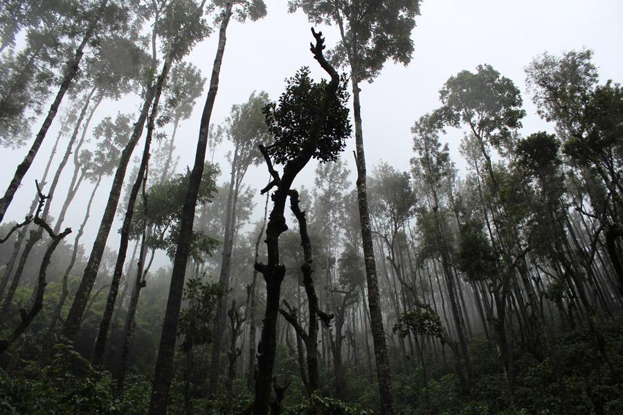 フリー写真 インドの霧のかかる熱帯雨林の風景