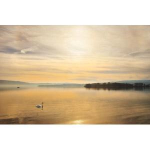 フリー写真, 風景, 自然, 夕暮れ(夕方), 夕焼け, 湖, 白鳥(ハクチョウ)