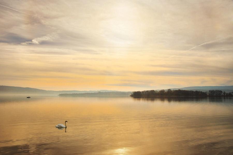 フリー写真 夕暮れのボーデン湖と白鳥