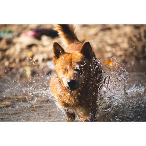 フリー写真, 動物, 哺乳類, 犬(イヌ), 目を閉じる(動物), 水しぶき