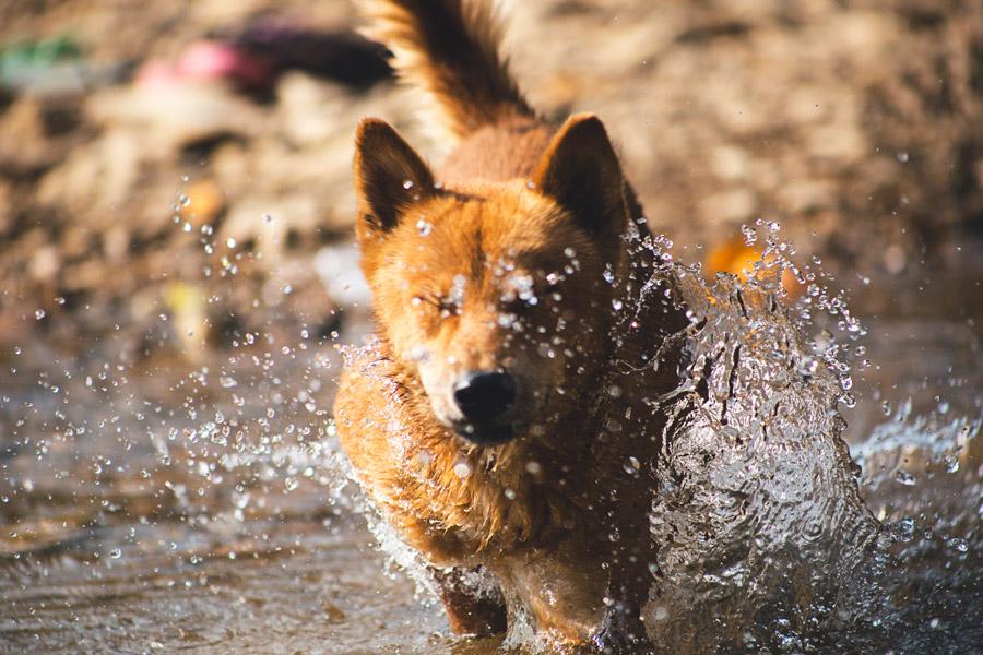 フリー写真 水しぶきと目を閉じる犬