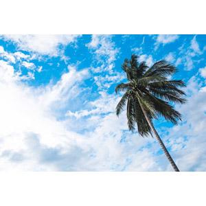 フリー写真, 風景, 自然, 樹木, 南国, 椰子(ヤシ), 空, 雲, ラオスの風景