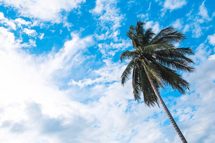 フリー写真 ヤシの木と雲と青空の風景