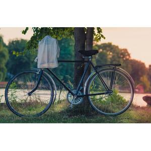 フリー写真, 乗り物, 自転車, 樹木, Tシャツ