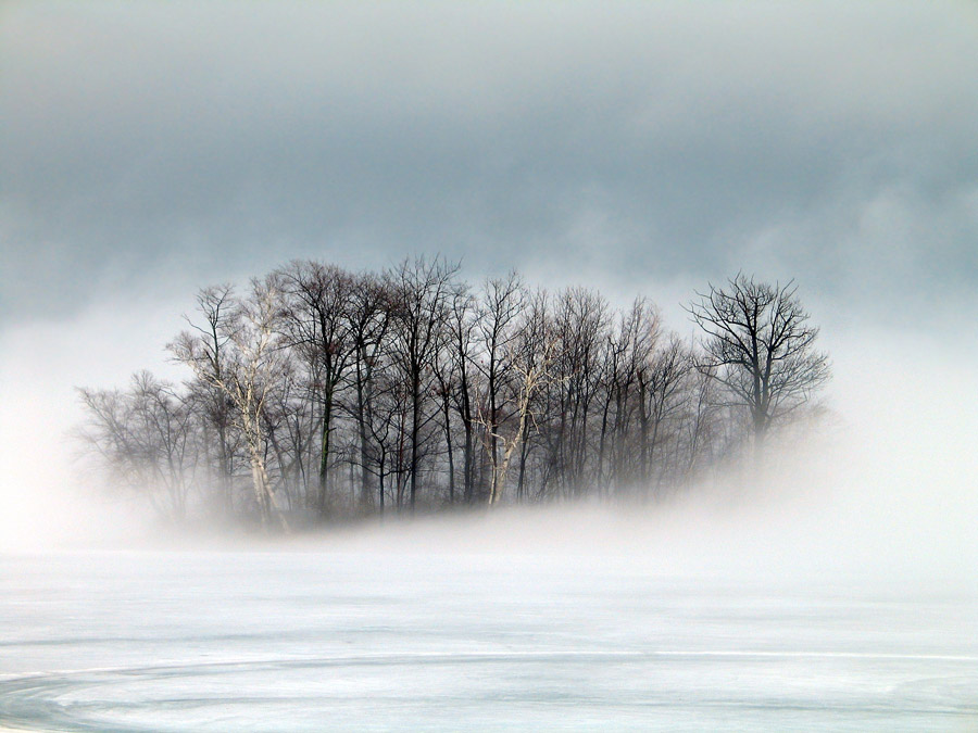 フリー写真 冬の朝霧に包まれる木々の風景