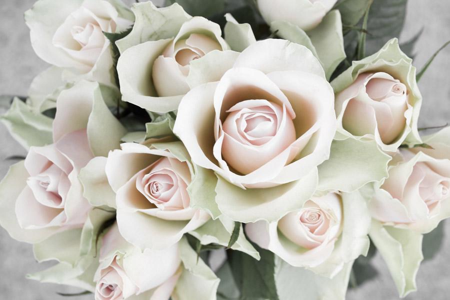 フリー写真 ピンク色の薔薇の花束