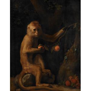 フリー絵画, ジョージ・スタッブス, 動物画, 哺乳類, 猿(サル)