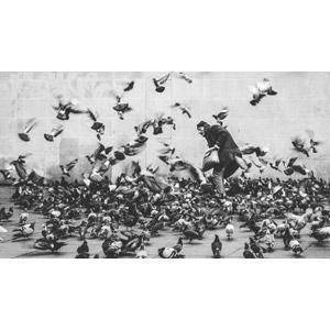 フリー写真, 人物, 老人, シニア男性, 動物, 鳥類, 鳥(トリ), 鳩(ハト), 群れ, モノクロ