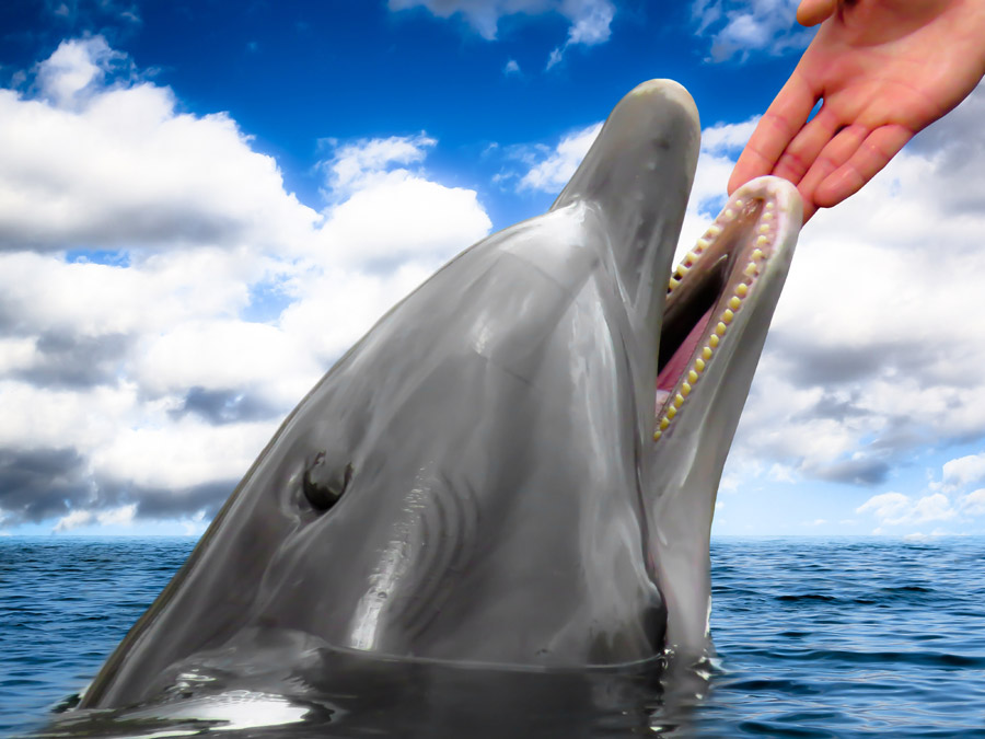 フリー写真 イルカと人の手