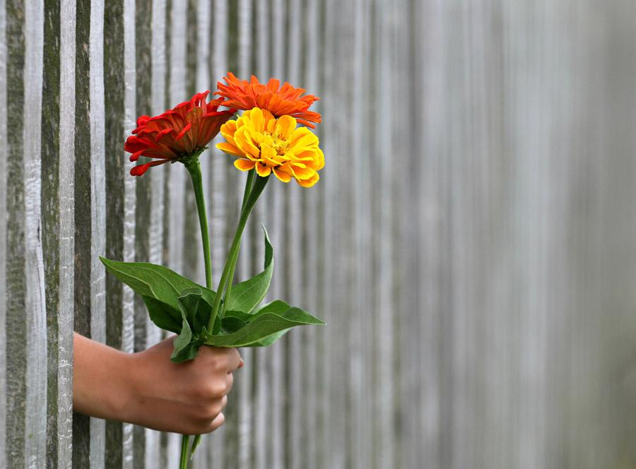 フリー写真 フェンスの隙間から差し出す花束