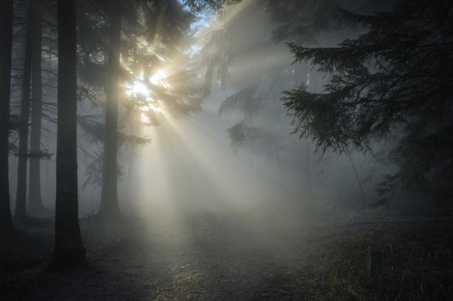 フリー写真 霧の立ち込める森に射し込む太陽の光