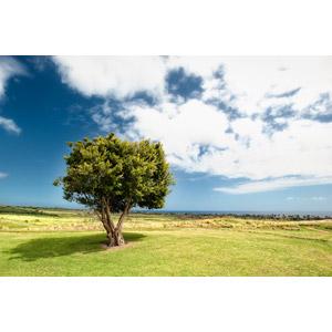 フリー写真, 風景, 樹木, 青空, 雲