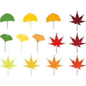 フリーイラスト, ベクター画像, AI, 植物, 葉っぱ, もみじ(カエデ), 紅葉(黄葉), イチョウ, 秋, 青もみじ