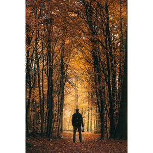 フリー写真, 人物, 男性, 後ろ姿, 人と風景, 森林, 樹木, 紅葉(黄葉), 秋