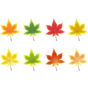 フリーイラスト, ベクター画像, AI, 植物, 葉っぱ, もみじ(カエデ), 紅葉(黄葉)