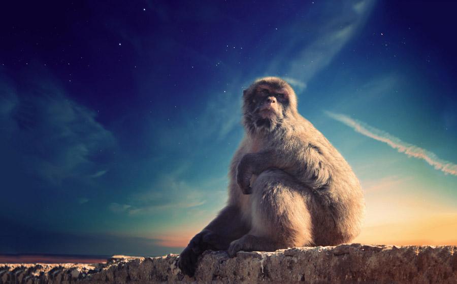 フリー写真 ジブラルタルの野猿と日暮れの空