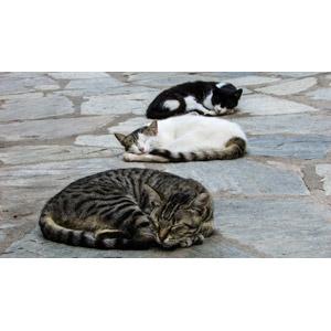 フリー写真, 動物, 哺乳類, 猫(ネコ), 寝る(動物), キジトラ猫, キジ白猫, 黒白猫