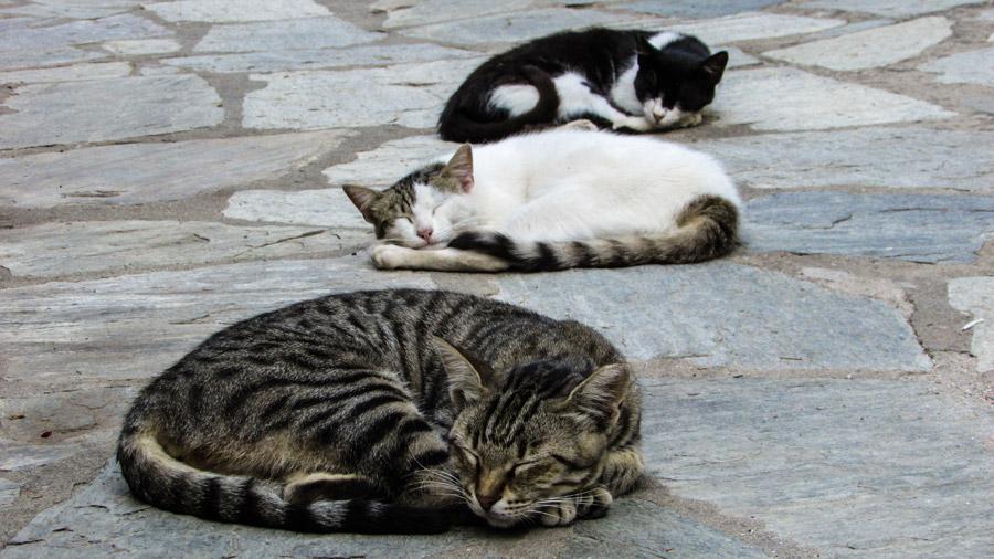 フリー写真 石畳の上で眠る三匹の猫