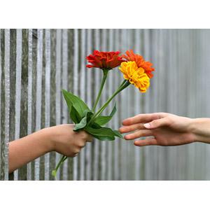 フリー写真, 人体, 手, 差し出す, 人と花, 植物, 花, 花束, プレゼント, 柵(フェンス)