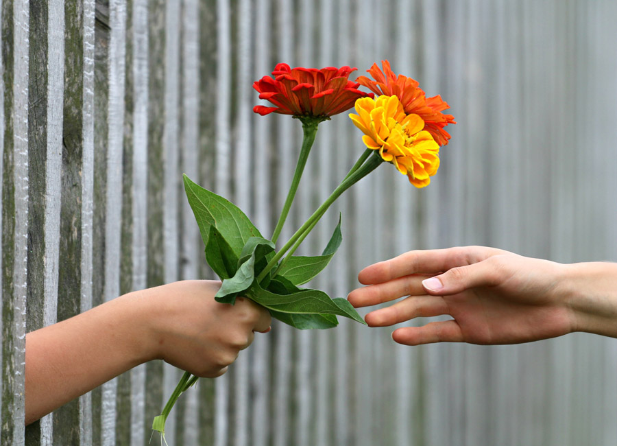 フリー写真 柵の隙間から差し出す花束と受け取る手