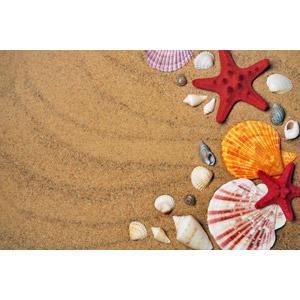 フリー写真, 背景, ビーチ(砂浜), 貝殻, ヒトデ, 夏