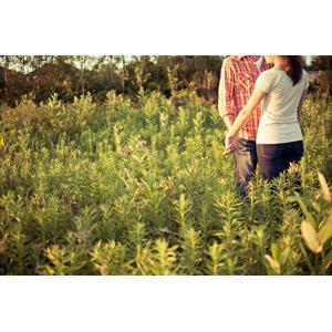 フリー写真, 人物, カップル, 恋人, 向かい合う, 手をつなぐ, 草むら