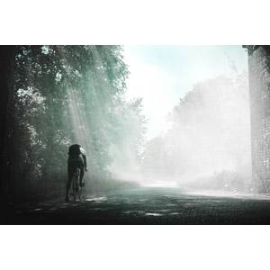 フリー写真, 風景, 木漏れ日, 太陽光(日光), 道路, 霧(霞), 人と風景, 人と乗り物, 自転車, ロードバイク, サイクリング, 後ろ姿