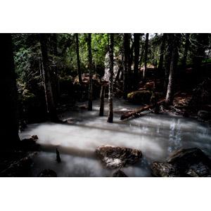 フリー写真, 風景, 自然, 森林, 樹木, 倒木, 河川, スイスの風景