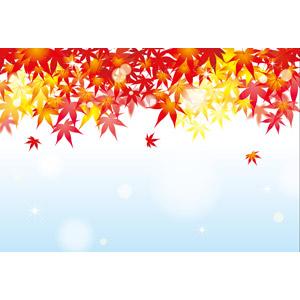 フリーイラスト, ベクター画像, EPS, 背景, 秋, 植物, 葉っぱ, もみじ(カエデ), 紅葉(黄葉)