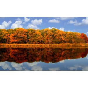 フリー写真, 風景, 自然, 湖, 森林, 青空, 雲, 紅葉(黄葉), 秋